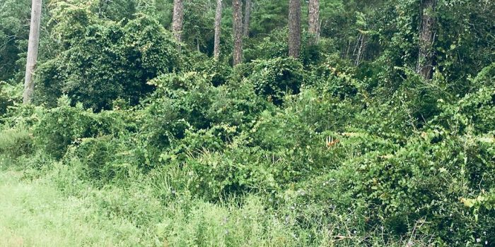 1 acre bay view lot located in McKissack Be ach