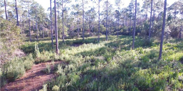 10 acre land parcel located approx. 3 miles from Carrabelle