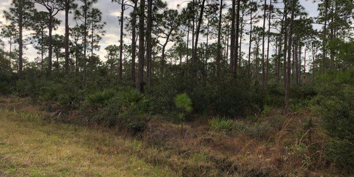 1.000 Acre lot in Magnolia Ridge - List price