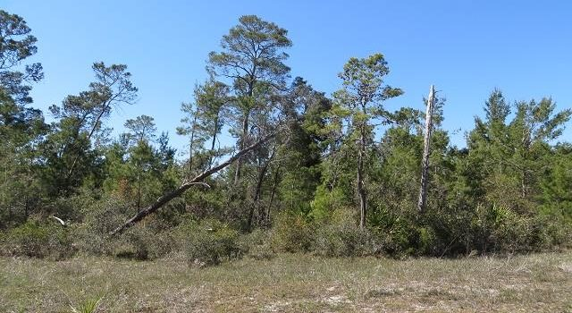 0.1640 Acre lot located in Carrabelle Landing