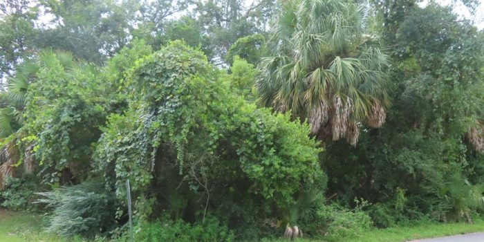 0.1400 Acre lot located in the Historic North Side of Apalachicola