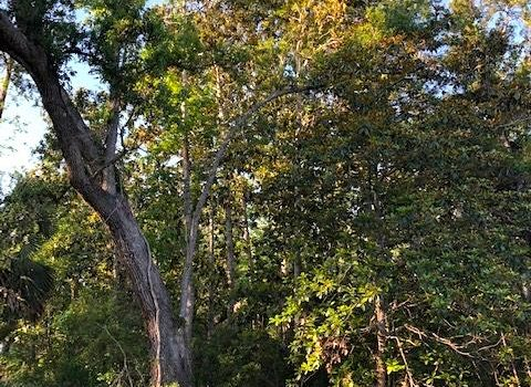 1.14 acre lot located in Greater Apalachicola