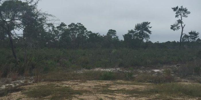 .76 acre lot located in Magnolia Ridge subdivision
